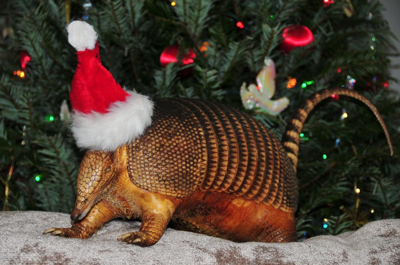 Christmas Armadillo - Message 57098 by DPower