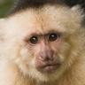 monteverde_org
