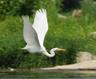 birdie6463
