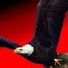 Eagle IL