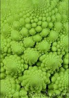 Click for 1:1 Romanescu Cauliflower enlargement